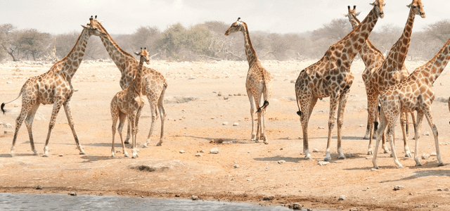 Exploring Namibia – Best Tips for First-time Visitors